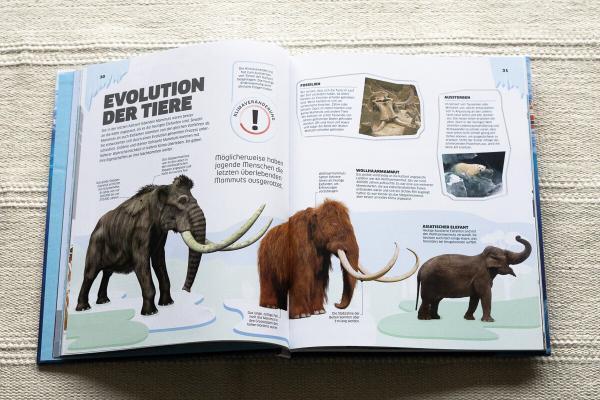 Tiere in ihrem Lebensraum EIS