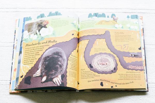 Wie leben Tier unter der Erde, wo lebt der Maulwurf