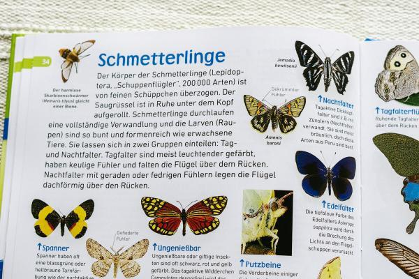 Insekten memo Bienen Käfer Schmetterlinge