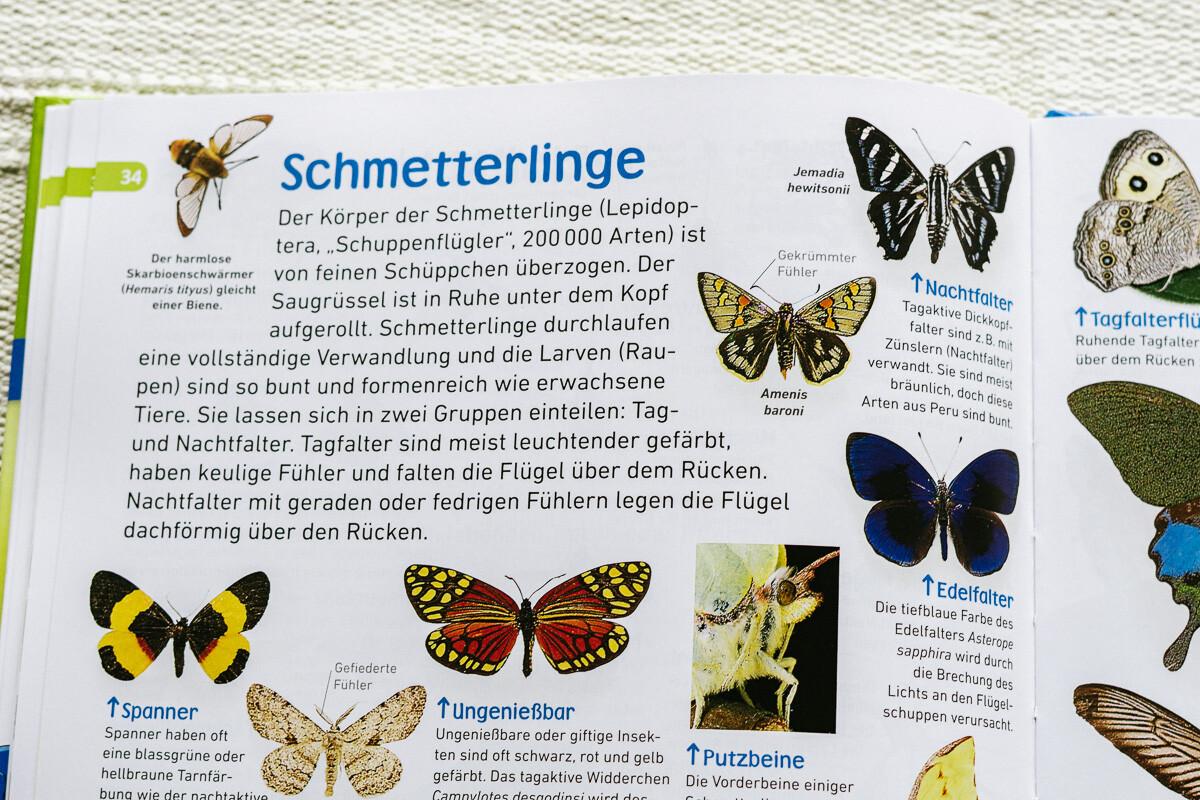 insekten käfer bienen schmetterlinge sachbuch für kinder memo